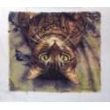Peculiar Perspective Kitchen Towel