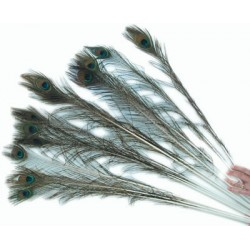 Pretty peacock feathers that your cat will love.