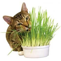 Imperial Cat Easy Grow Oat Grass Kit