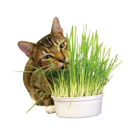 Imperial Cat Easy Grow Oat Grass Kit