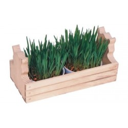 Oat Garden Kit for Cats