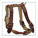 Harnesses and Leads