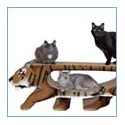 USA Giant Shape Cat Scratchers