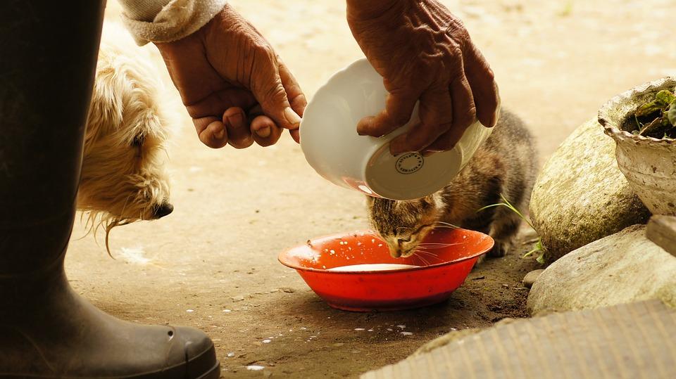 feeding strays